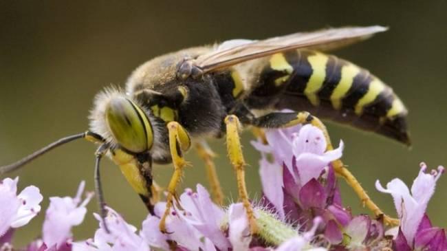 Eşek arıları bu denklemi çözebiliyor: X, Y'den,...